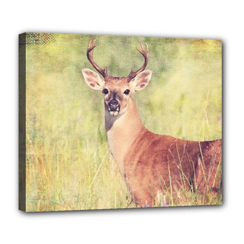 Buck Deluxe Canvas 24  X 20  (stretched)
