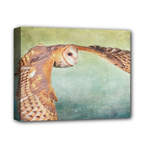 Barn Owl Deluxe Canvas 14  X 11  (stretched)