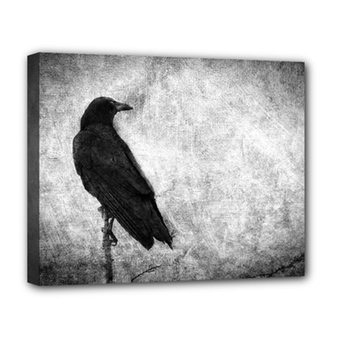 Black Crow Deluxe Canvas 20  x 16  (Stretched)