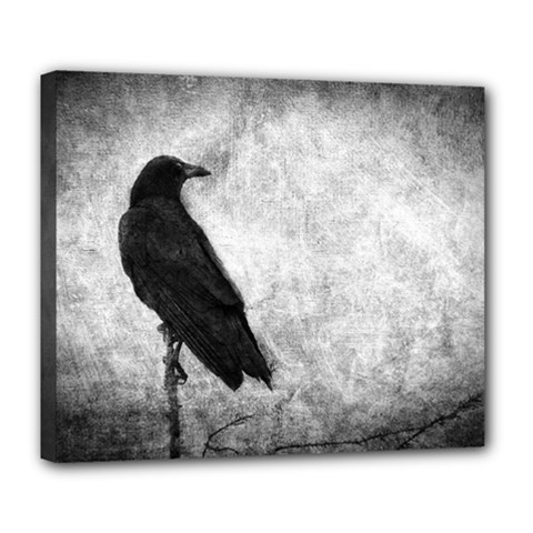 Black Crow Deluxe Canvas 24  x 20  (Stretched)