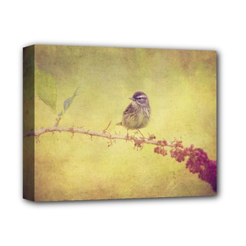 Palm Warbler Deluxe Canvas 14  x 11  (Stretched)