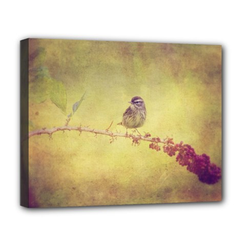 Palm Warbler Deluxe Canvas 20  x 16  (Stretched)