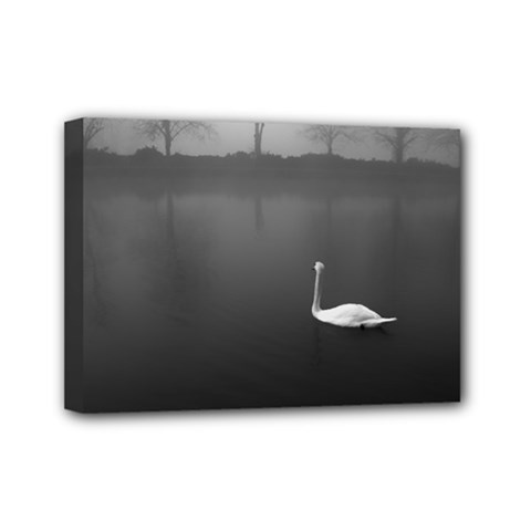 swan 5  x 7  Framed Canvas Print