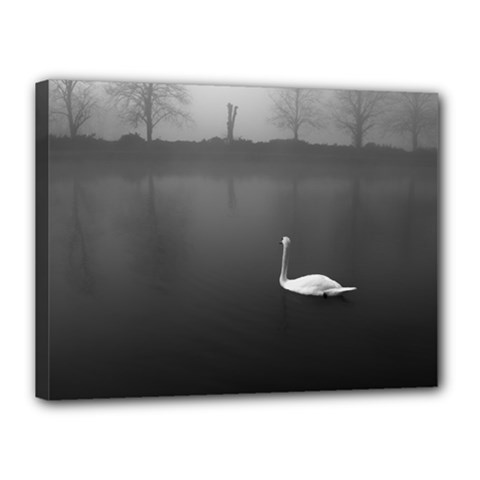 swan 12  x 16  Framed Canvas Print