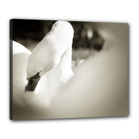 swan 16  x 20  Framed Canvas Print