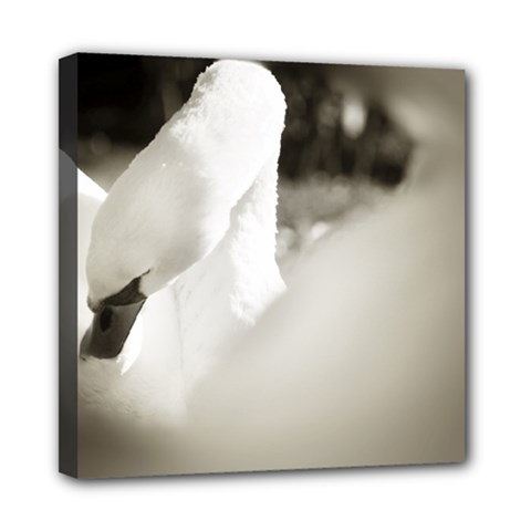 Swan 8  X 8  Framed Canvas Print