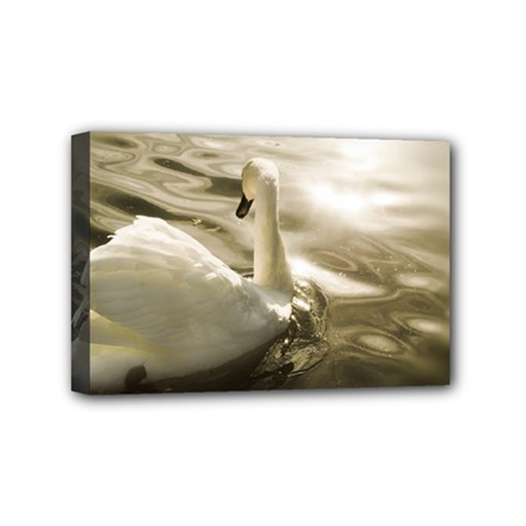 Swan 4  X 6  Framed Canvas Print