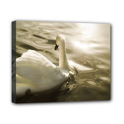 Swan 8  X 10  Framed Canvas Print