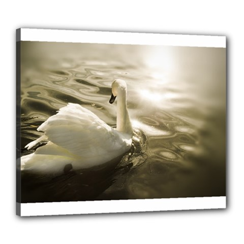 swan 20  x 24  Framed Canvas Print