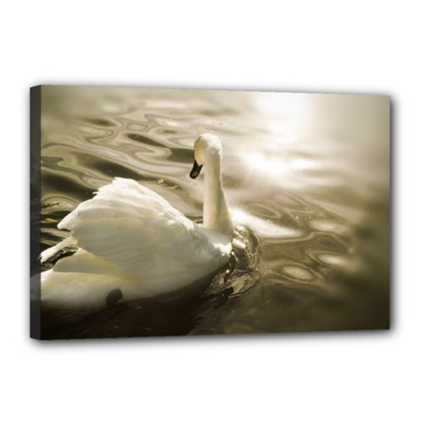 swan 12  x 18  Framed Canvas Print