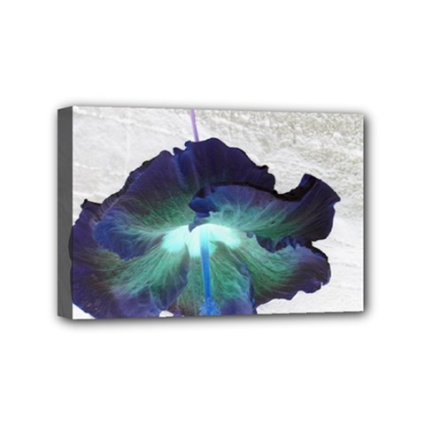 Exotic Hybiscus   4  x 6  Framed Canvas Print