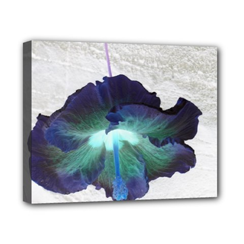 Exotic Hybiscus   8  x 10  Framed Canvas Print