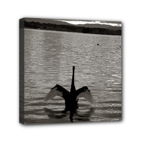 swan, Canberra 6  x 6  Framed Canvas Print