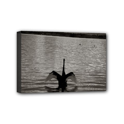 swan, Canberra 4  x 6  Framed Canvas Print