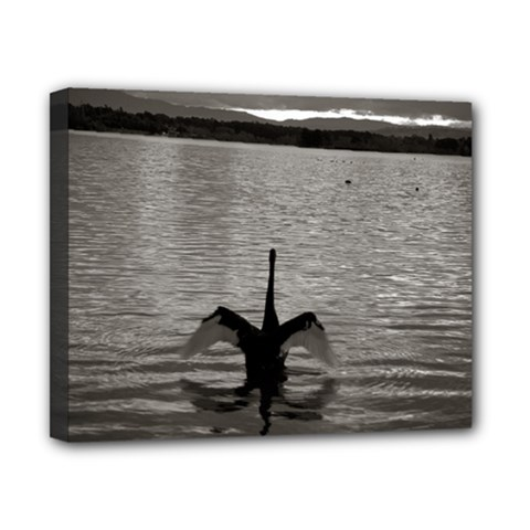 swan, Canberra 8  x 10  Framed Canvas Print