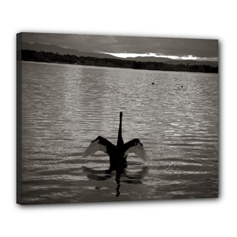 Swan, Canberra 16  X 20  Framed Canvas Print