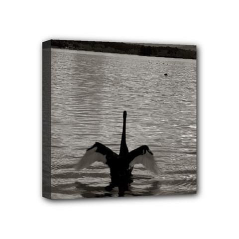 swan, Canberra 4  x 4  Framed Canvas Print