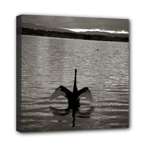 Swan, Canberra 8  X 8  Framed Canvas Print