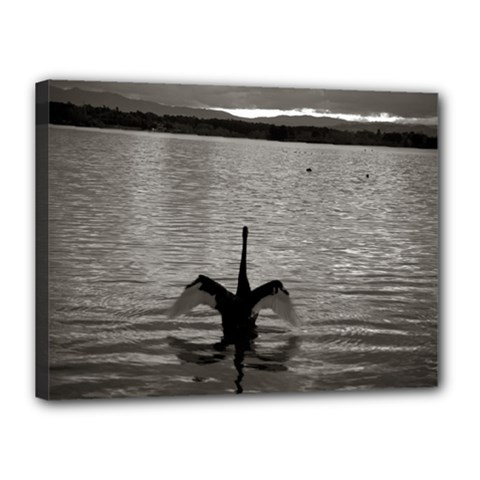 swan, Canberra 12  x 16  Framed Canvas Print