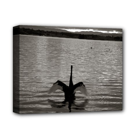 swan, Canberra Deluxe Canvas 14  x 11  (Stretched)