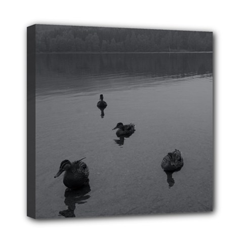 ducks 8  x 8  Framed Canvas Print