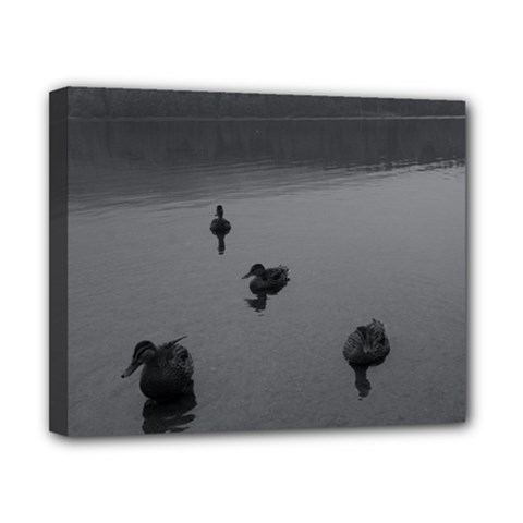 ducks 8  x 10  Framed Canvas Print