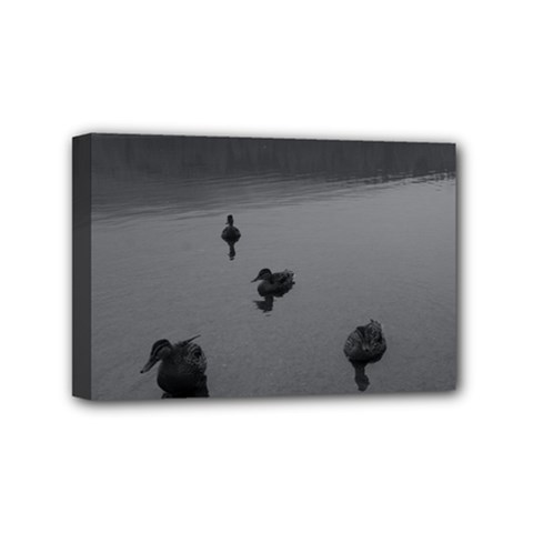 ducks 4  x 6  Framed Canvas Print