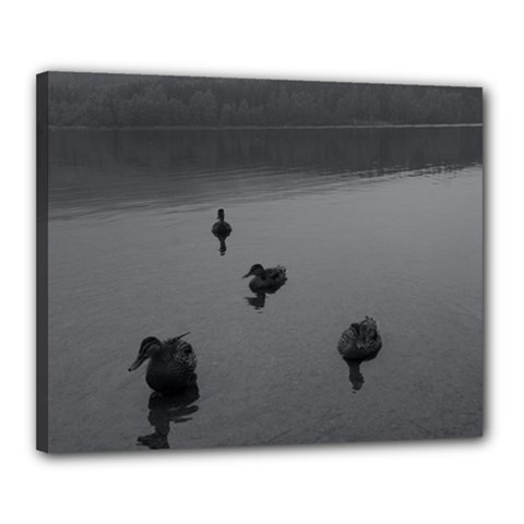 Ducks 16  X 20  Framed Canvas Print