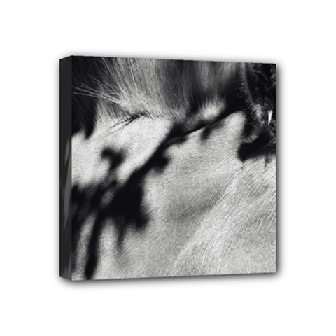 Horse 4  X 4  Framed Canvas Print