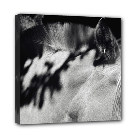 horse 8  x 8  Framed Canvas Print
