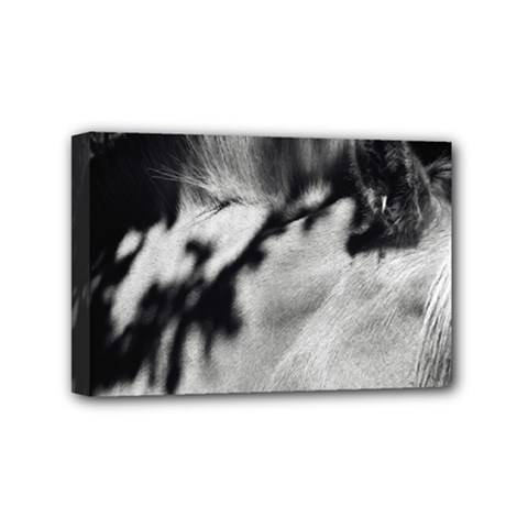 Horse 4  X 6  Framed Canvas Print