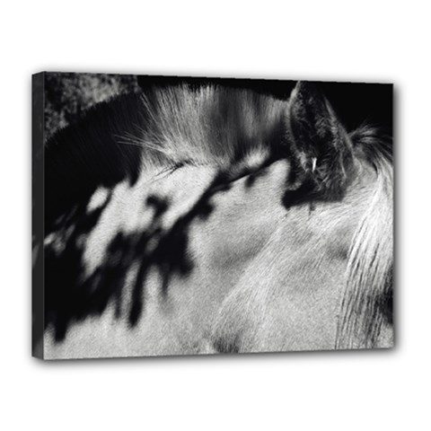 Horse 12  X 16  Framed Canvas Print