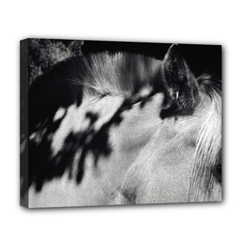 horse Deluxe Canvas 20  x 16  (Stretched)