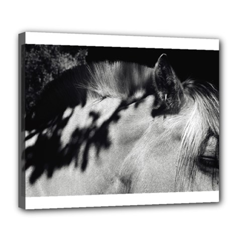 horse Deluxe Canvas 24  x 20  (Stretched)