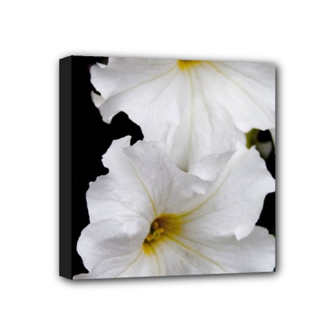 White Peonies   4  X 4  Framed Canvas Print