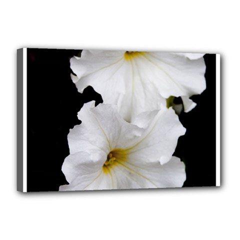 White Peonies   12  x 18  Framed Canvas Print