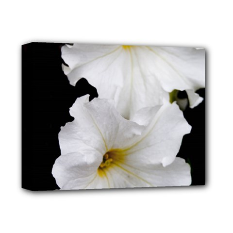 White Peonies   Deluxe Canvas 14  x 11  (Stretched)