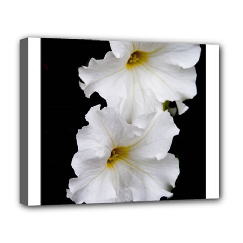 White Peonies   Deluxe Canvas 20  x 16  (Stretched)