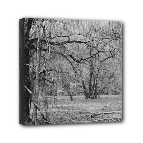 Black and White Forest 6  x 6  Framed Canvas Print