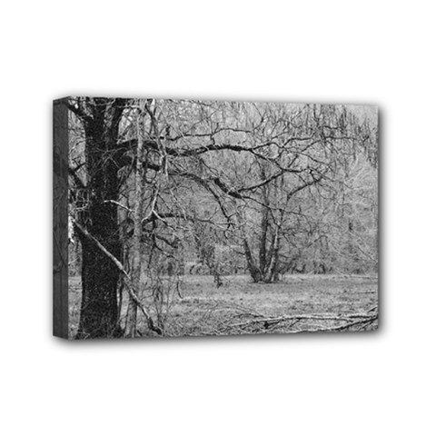Black And White Forest 5  X 7  Framed Canvas Print