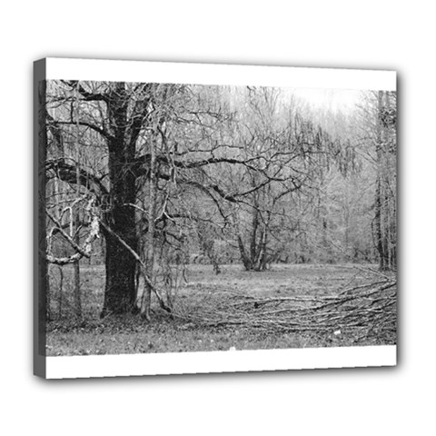Black and White Forest Deluxe Canvas 24  x 20  (Stretched)
