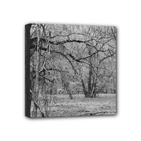Black and White Forest 4  x 4  Framed Canvas Print