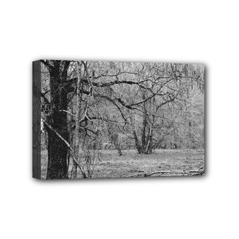 Black And White Forest 4  X 6  Framed Canvas Print