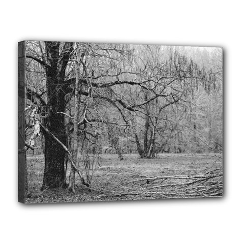 Black and White Forest 12  x 16  Framed Canvas Print