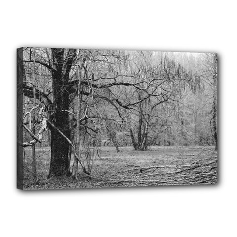 Black and White Forest 12  x 18  Framed Canvas Print