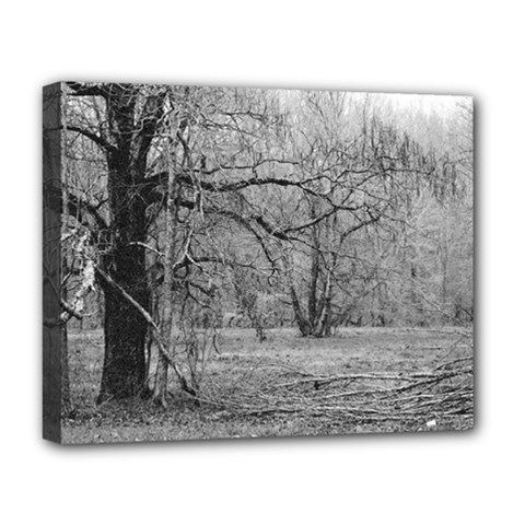 Black and White Forest Deluxe Canvas 20  x 16  (Stretched)