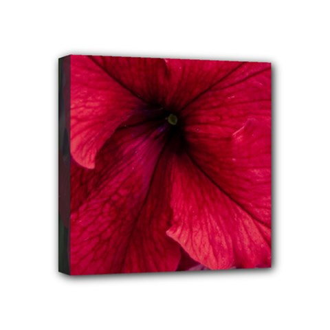 Red Peonies 4  x 4  Framed Canvas Print