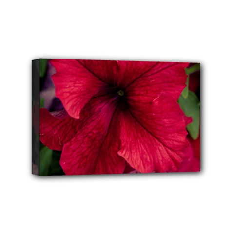 Red Peonies 4  x 6  Framed Canvas Print