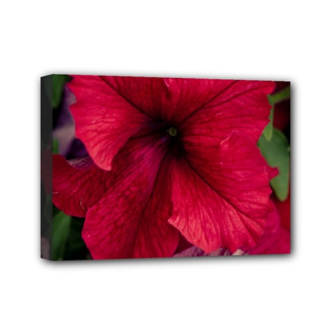 Red Peonies 5  x 7  Framed Canvas Print