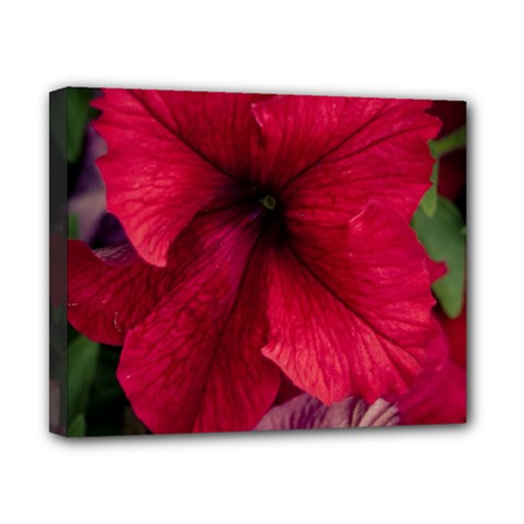 Red Peonies 8  X 10  Framed Canvas Print